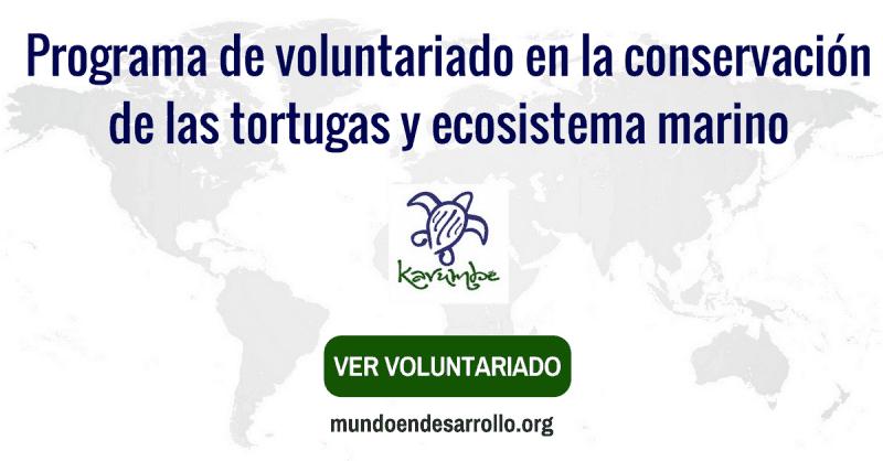 Programa de voluntariado internacional con tortugas y ecosistema marino