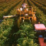 Curso gratuito en innovación agroalimentaria ¡Totalmente en español!